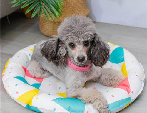 Double sided waterproof summer cool pet bed
